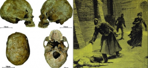 skull_crop-690x320