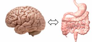 Gut-Brain-690x320