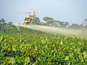 Aerial spraying of fungicides on a banana plantation. Image Credit: GHJ Kema.