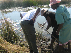 Obtaining snail samples near the Kwite dam during a Schistosomiasis outbreak investigation, Empandeni ward, Mangwe district, Matebeleland South province, Zimbabwe. Photo by Pugie Chimberengwa via CDC Global Flickr.